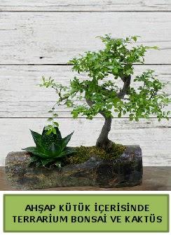 Ahşap kütük bonsai kaktüs teraryum  Aydın internetten çiçek siparişi