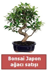 Japon ağacı bonsai satışı  Aydın çiçek siparişi sitesi
