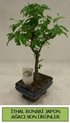 İthal bonsai japon ağacı bitkisi  Aydın hediye sevgilime hediye çiçek