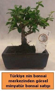 Japon ağacı bonsai satışı ithal görsel  Aydın çiçek yolla