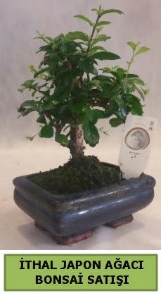 İthal japon ağacı bonsai bitkisi satışı  Aydın çiçekçi telefonları