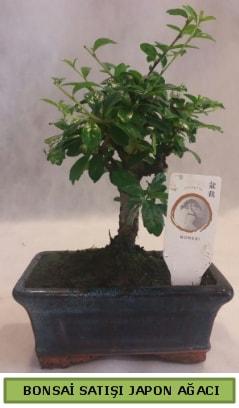 Minyatür bonsai ağacı satışı  Aydın çiçek gönderme