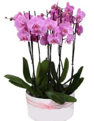 Beyaz seramik içerisinde 7 dallı mor orkide  Aydın çiçekçi telefonları
