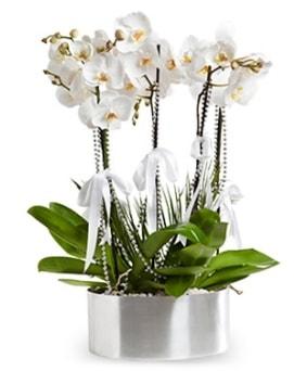 Beş dallı metal saksıda beyaz orkide  Aydın çiçek yolla