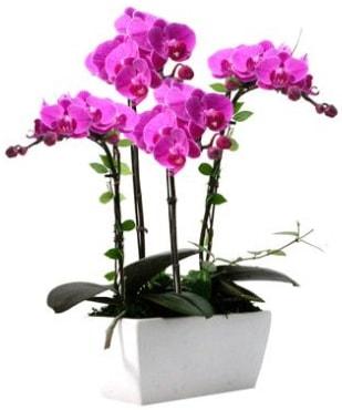 Seramik vazo içerisinde 4 dallı mor orkide  Aydın çiçek satışı
