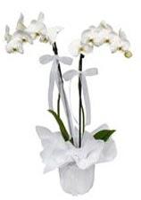 2 dallı beyaz orkide  Aydın güvenli kaliteli hızlı çiçek