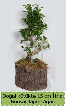Doğal kütükte İthal bonsai japon ağacı  Aydın çiçek gönderme