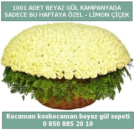 1001 adet beyaz gül sepeti özel kampanyada  Aydın çiçek gönderme sitemiz güvenlidir