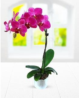 Tek dallı mor orkide  Aydın çiçek satışı