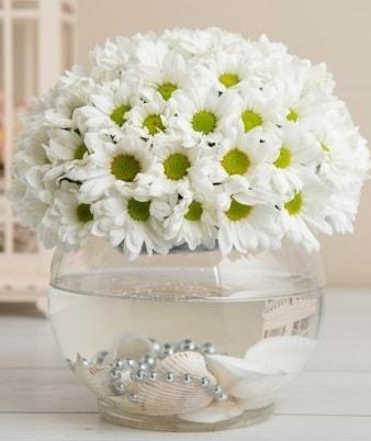 Fanusta beyaz Papatya  Aydın çiçek satışı