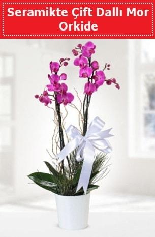 Seramikte Çift Dallı Mor Orkide  Aydın anneler günü çiçek yolla