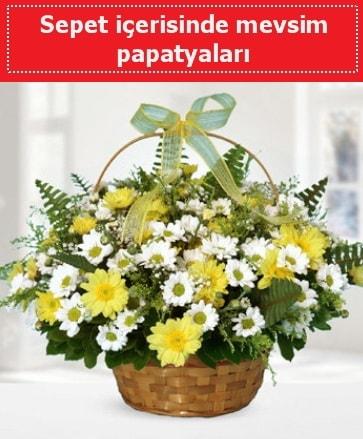 Sepet içerisinde mevsim papatyaları  Aydın ucuz çiçek gönder