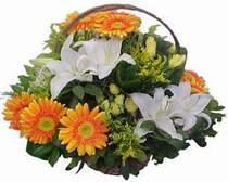 Aydın online çiçekçi , çiçek siparişi  sepet modeli Gerbera kazablanka sepet